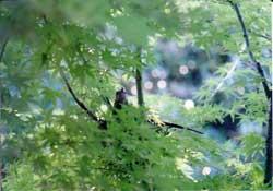 ヒヨの巣籠もり