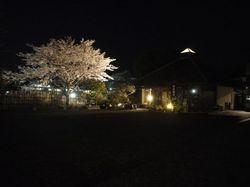 夜桜2012-4.jpg