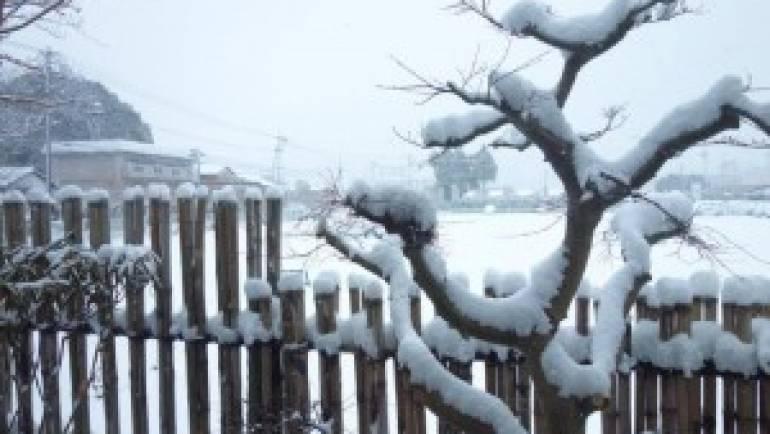 猛烈寒波到来!交通の乱れで宅配に遅れが生じています。