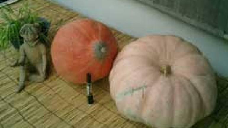 ビックリかぼちゃ