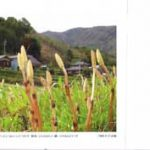 肥前鹿島便り -写真で見る鹿島-