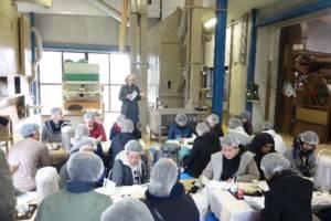 工場内でのお茶の淹れ方実習